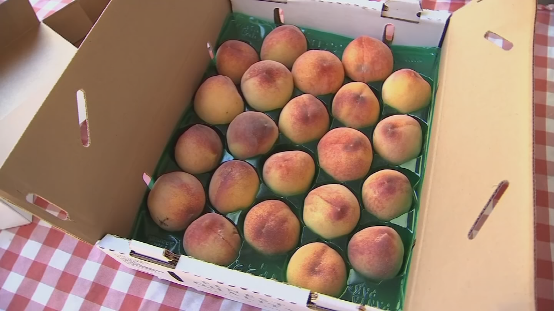 It's peach picking season at Schnepf Farms in Queen Creekbut this year's smaller crop forced the farm to shorten its annual Peach Festival. (Source: 3TV/CBS 5)