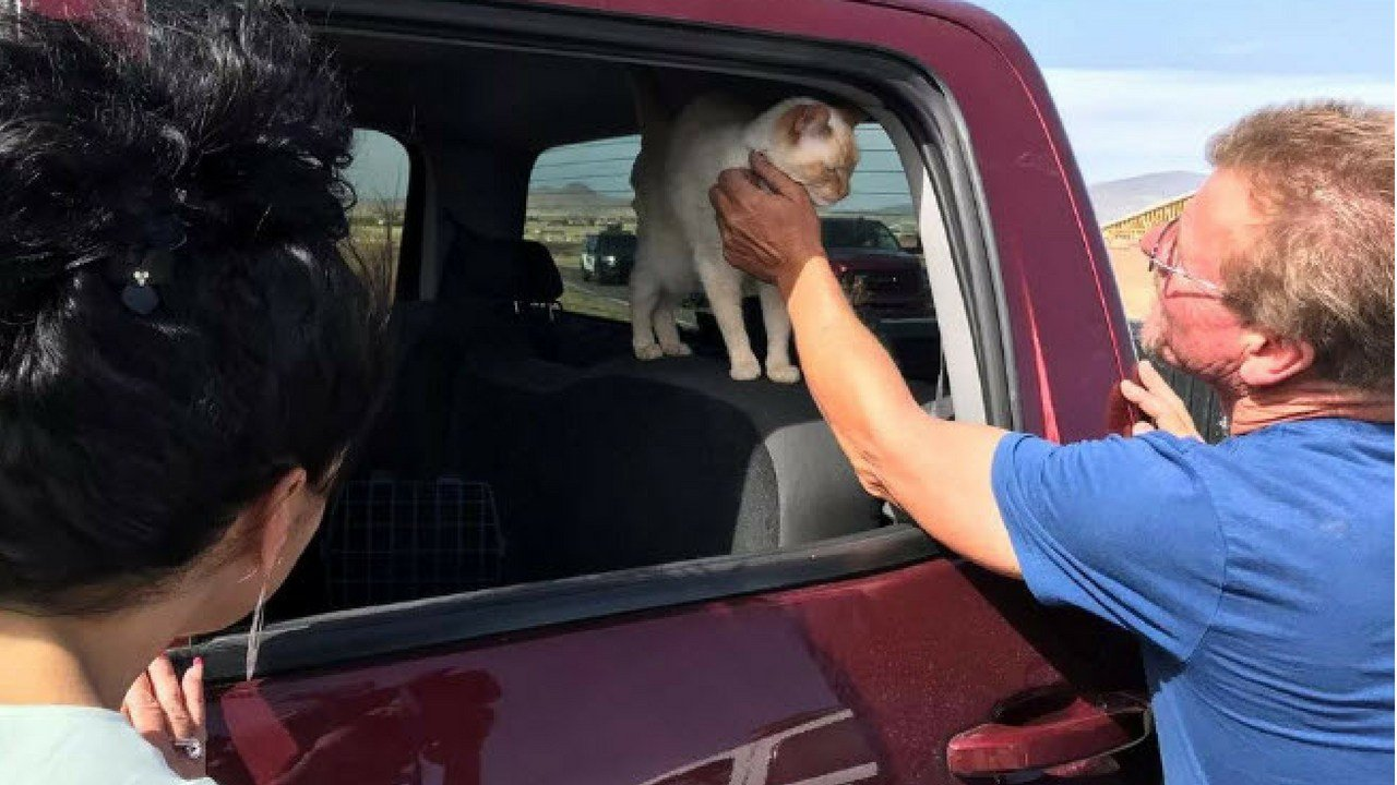 Chris and Christine Pirone feed one of the cats they evacuated with as the Viewpoint Fire threatened their Prescott home.