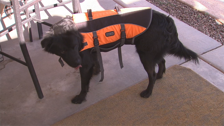 Smokey now rocks a brand-new life jacket to help him learn how to swim. (Source: 3TV/CBS 5)