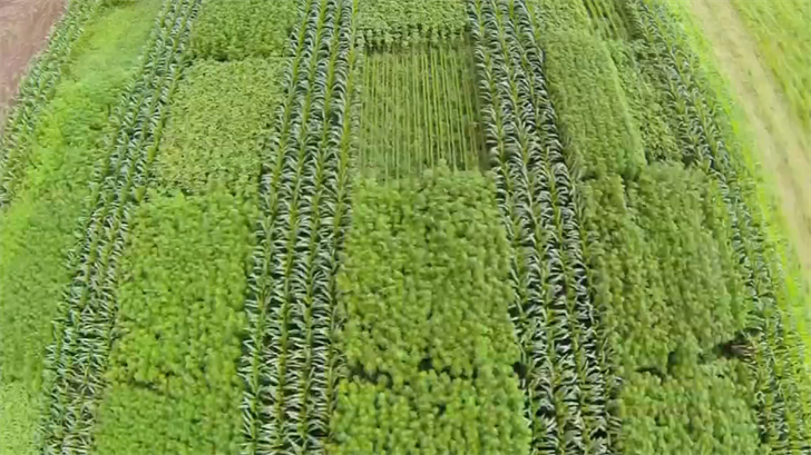 Until this week, industrial hemp farming was illegal in Arizona. Gov. Doug Ducey has signed a bill reversing that. (Source: 3TV/CBS 5)