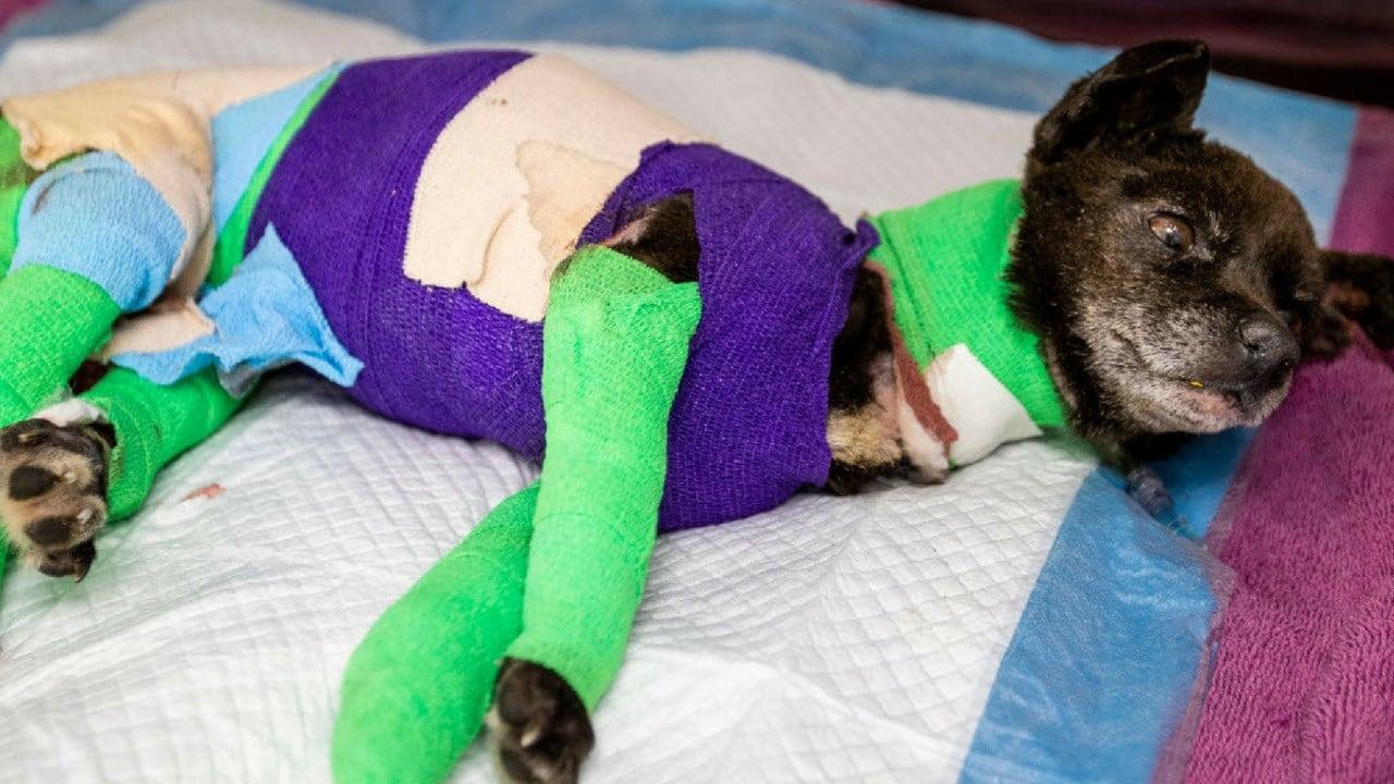 (Source: Pima Animal Care Center)
