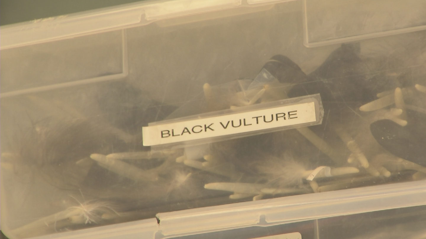 There are 140 species in inventory. (Source: 3TV/CBS 5)
