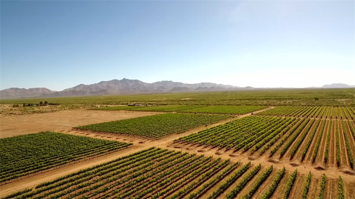 Roughly 75 percent of Arizona's wine grapes are grown in this region. (Source: 3TV/CBS 5)