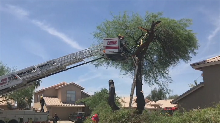 A Chandler man was just trying to tackle some household chores and ended up stuck in a tree. (Source: Chandler Fire Department)