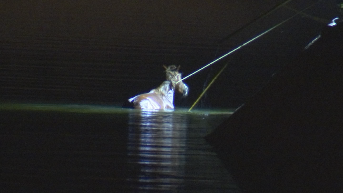 A Salt River wild horse and her baby were rescued from a canal near Mesa by firefighters Sunday night. (Source: 3TV/CBS 5)