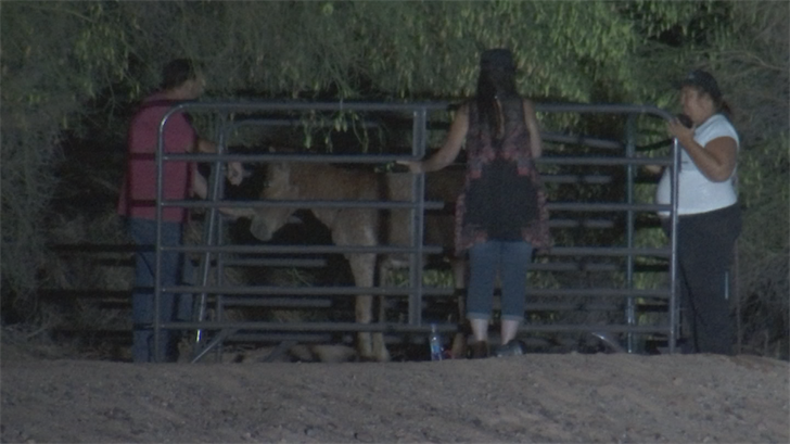 Both horses are expected to survive. (Source: 3TV/CBS 5)