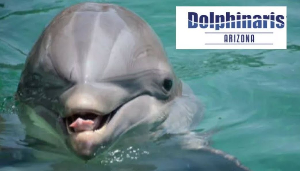 Bodie the dolphin died Sept. 23, 2018 (Source: Dolphinaris)