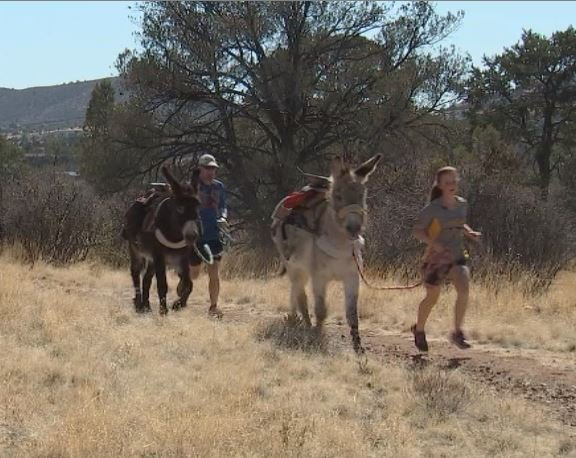 Emily and Bob McMahon run their donkeys almost daily in the hills above their home in Prescott. (Source: 3TV/CBS 5)
