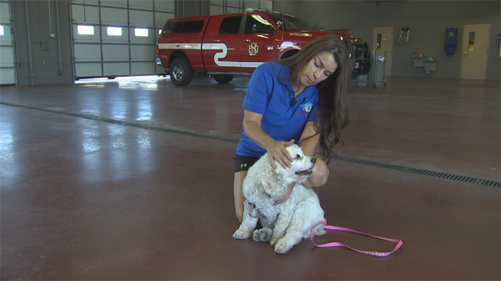 (Source: 3TV/CBS 5)Audra Colson has been a volunteer with the Surprise Fire Department's crisis response team for six years and saw the need for helping pets left to fend for themselves.