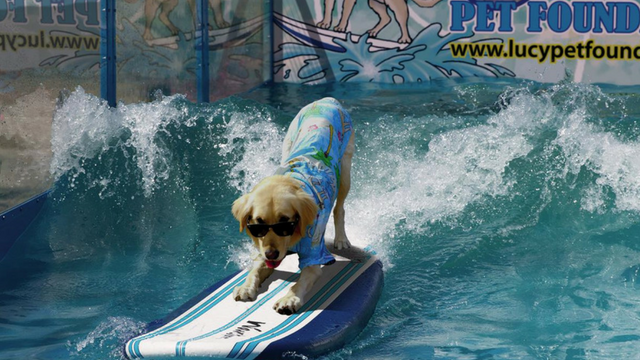 They have surfing dogs at the Phoenix Pet Expo! (Source: Lucy Pet Media)