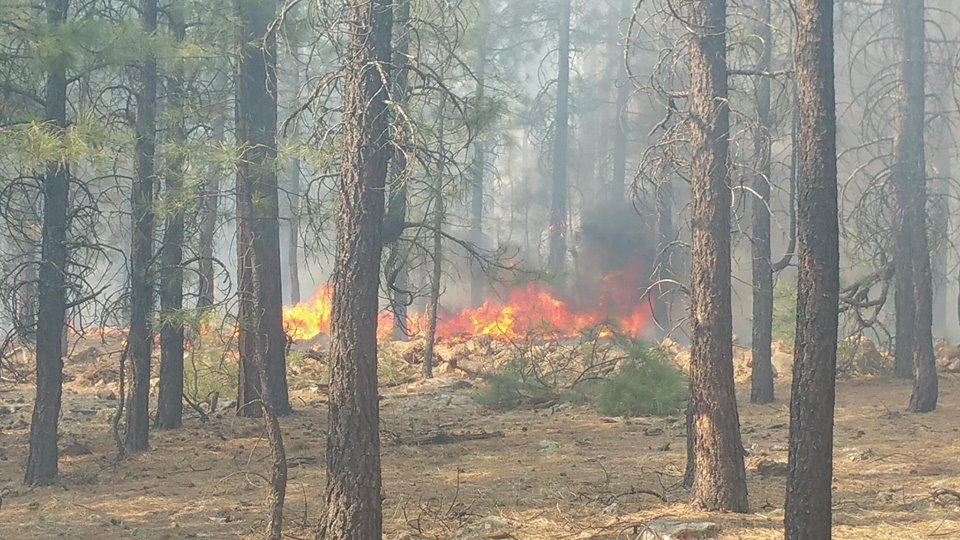 The fire started on Sunday. (Source: Forest Lakes Fire Department)