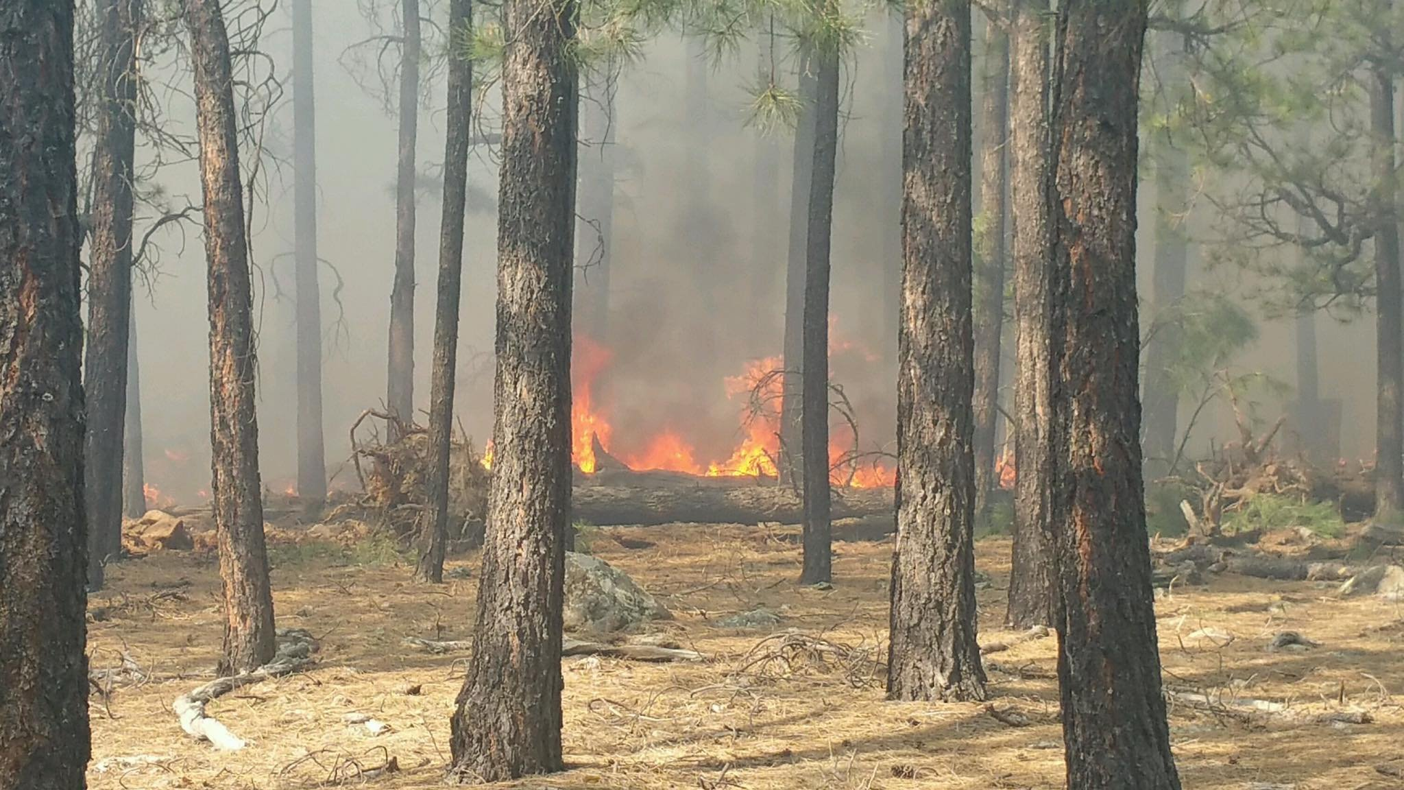 The fire has burned 3 acres. (Source: Forest Lakes Fire Department)