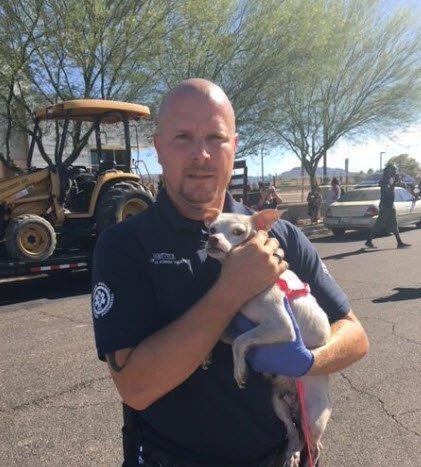 (Source: Arizona Humane Society)