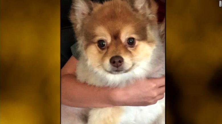 An 8-year-old Pomeranian died during a layover on a Delta flight from Phoenix to Newark, New Jersey. (Source: CNN)