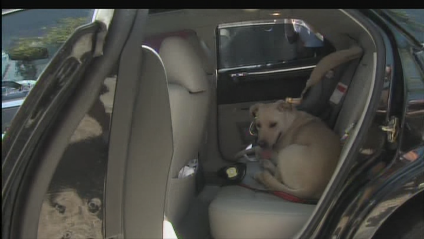 Never leave your pet inside a hot car. (Source: 3TV/CBS 5)