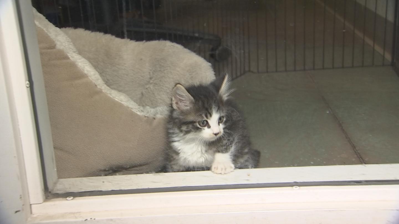 10-week old tabby kitten. (Source: 3TV/CBS5)
