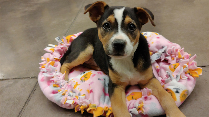 Everglades is back at a Phoenix animal shelter after being stolen. (Source: Arizona Animal Welfare League)