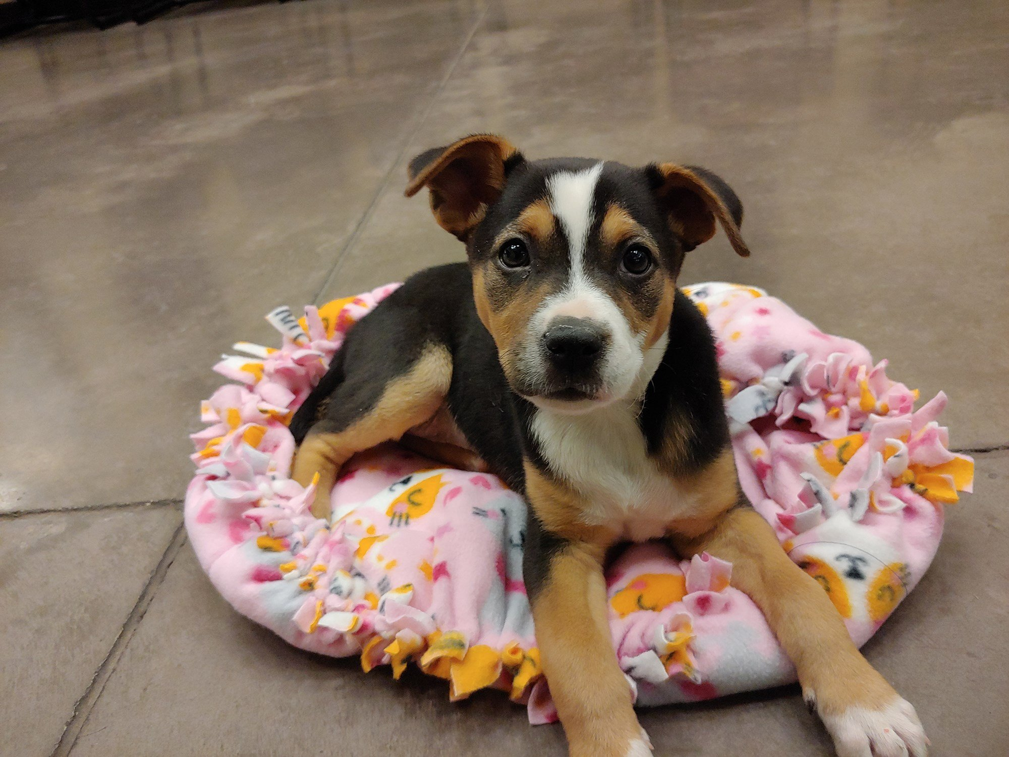 No charges will be filed in the case of the stolen puppy. (Source: Arizona Animal Welfare League)