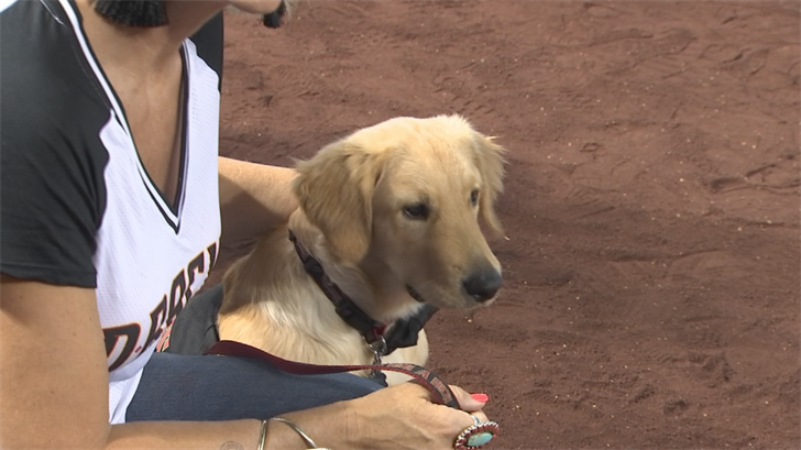 The Arizona Diamondbacks recognized Todd the dog on Sunday. (Source: 3TV/CBS 5)