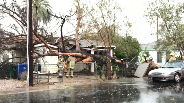 A tree fell on a home in Mesa. (Source: 3TV/CBS 5)