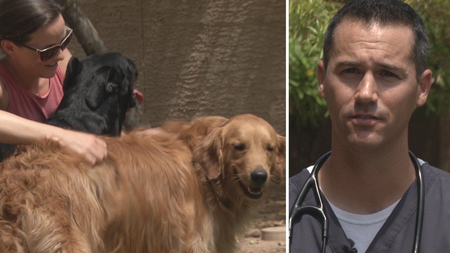 Ryan Dunning, a veterinarian, is credited with saving two dogs from drowning in a canal when he was out jogging Wednesday morning in Chandler. (Source: 3TV/CBS 5)