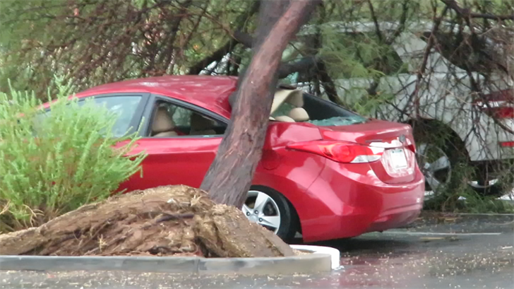 Brent Yosick and his wife Britney don't know what to do after a tree totaled their only car during Monday's monsoon rain. (Source: 3TV/CBS 5)