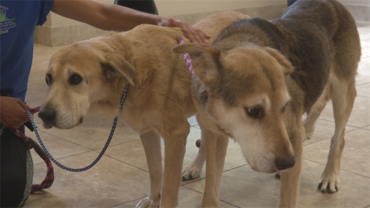 Mohave and Nellie are two shelter pups, spending the dog days of summer boarded at the pet resort. (Source: 3TV/CBS 5)