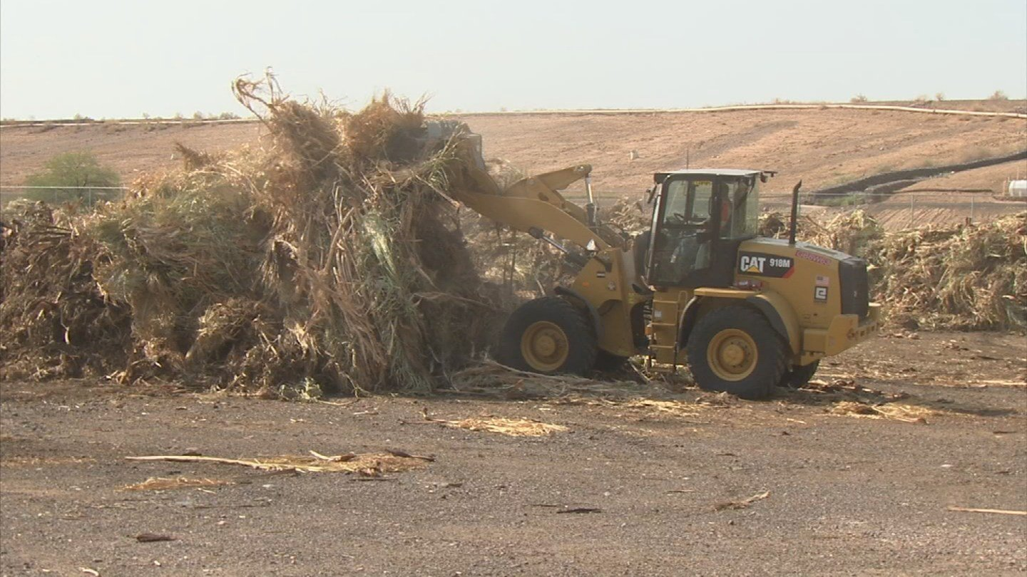 Palm tree waste has a second life. If you live in Phoenix, there's a good chance it will be turned into food for livestock. (Source: 3TV/CBS 5)