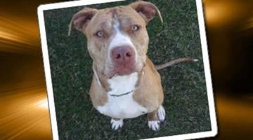 By Arizona Humane Society