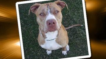 By Arizona Humane Society