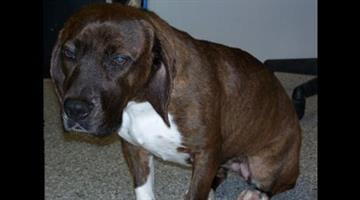 Del was rescued from a Phoenix canal By Jennifer Thomas