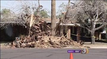 A skirt of dead palm fronds suffocated a landscaper who was working in the the front yard of Mesa home Saturday afternoon. By Catherine Holland