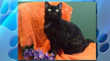 Biss has a bold and colorful tortie speckled coat and expressive eyes. By Catherine Holland