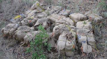 Agents found 983 pounds of marijuana in scrub brush near Sonoita, Ariz. By Jennifer Thomas