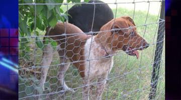Sadie is up for adoption. By Jennifer Thomas
