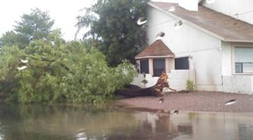Tree down at Dobson and Guadalupe roads By Jennifer Thomas