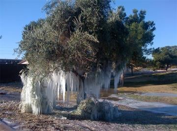 The freezing temperatures reportedly short-circuited the box that controls the sprinklers at The Lakes at Ahwatukee, creating a winter wonderland across the golf course. By Jennifer Thomas