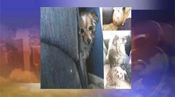 Baby had to be put down after she was attacked by two pit bulls. By Jennifer Thomas