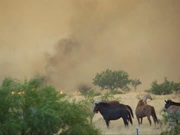Fire races through the flats into a horse rescue, causing many to evacuate along with livestock. By Jennifer Thomas