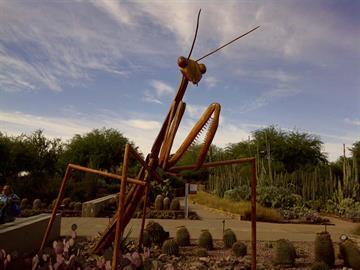 Praying mantis By Catherine Holland