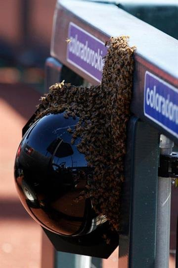 A large swarm of bees made their way onto the field, delaying the Diamondbacks-Giants game Sunday afternoon. By Jennifer Thomas