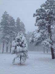 Snow in Flagstaff on Sunday morning By Mike Gertzman