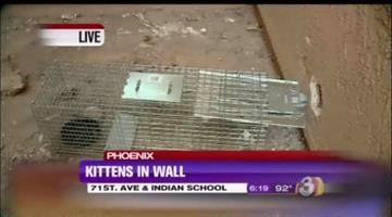 The Arizona Humane Society believes the cats have moved out of the wall. By Mike Gertzman
