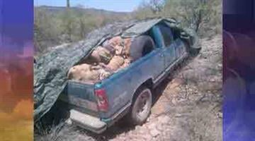 A 16-year-old illegal alien was arrested after Maricopa County Sheriff's deputies found a truck carrying more than a half a ton of marijuana on Wednesday. By Andrew Michalscheck