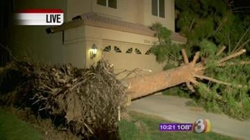 The storm uprooted this huge tree at home near 38th Street and Chandler Blvd. in Ahwatukee By Mike Gertzman
