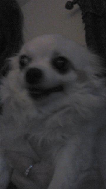 Linda Hetrick's dog Angel By Meredith Yeomans