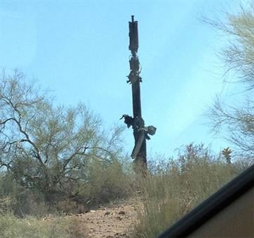 A saguaro cactus was found burning near Shea Boulevard and Technology Drive in Fountain Hills. By Jennifer Thomas