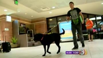 A Valley Marine and his bomb-sniffing dog are back in Phoenix. By Jennifer Thomas