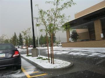 Hail piled up outside Sam's Club in Flagstaff resembled snow. By Jennifer Thomas
