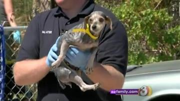 Maricopa County sheriff's deputies rescued several dogs from a Tonopah home Tuesday morning. By Jennifer Thomas